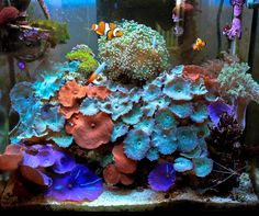 naturalwonders - 2011 Featured Nano Reefs - Featured Aquariums - Monthly Featured Nano Reef Aquarium Profiles - Nano-Reef.com Forums