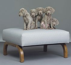 william wegman of coarse!
