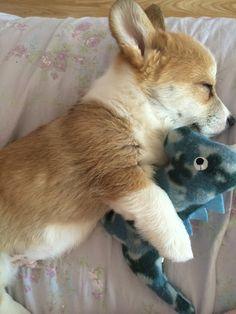 snuggle buddies ( - Imgur