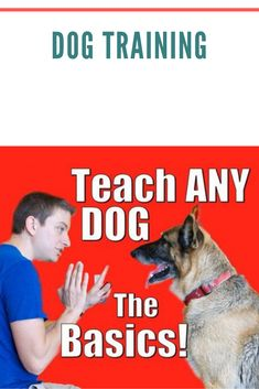 Training your dog is centered on building your relationship with your pet dog and setting up boundaries. Be firm yet consistent and you will see awesome results when it comes to your dog training adventures. Raising Kittens, German Dog Breeds, Rottweiler Dog, Rottweiler Facts, Sleeping Kitten, The Perfect Dog, Dog Training Tips, Training Videos, Training Plan