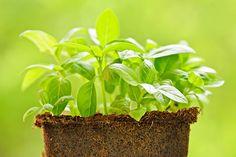 Insetti nell'orto e in giardino: piante repellenti più efficaci: L'orticoltura e il giardinaggio ...