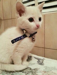Gambar Kucing Lucu Bergerak Dan Bersuara Majalah Cat Dog