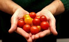 Först händer ingenting och sen äter man ihjäl sig Visst är det ungefär nu som tomatsäsongen når sin absoluta peak? Efter att alla lyckliga stunder i växthuset med att plocka tjuvskott, vattna och h… Gazpacho, Preserving Food, Types Of Food, Ratatouille, Preserves, Harvest, Vegan, Vegetables, Healthy
