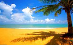 Terra/Natureza Praia  Tree Nature Sand Water Ocean Cloud Papel de Parede