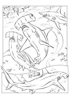 Deze Kleurplaat Haaien 4716 Kun Je Het Afdrukken Door Of