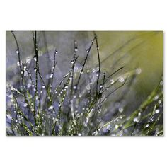 """Trademark Art """"Spring Morning"""" by Beata Czyzowska Young Photographic Print on Wrapped Canvas Size:"""