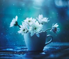 flowers and blue εικόνα