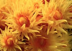 Beautiful Soft Coral Flowers Underwater