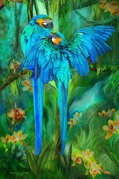 Beauty In Nature Series: Tropic Spirits Gld Blu Macaw