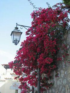 Praiano,Italy on the beautiful Amalfi Coast