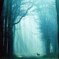 forest / deer