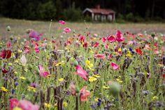 Visualaddict kukkapelto, valokuvaus, valokuvaaminen, Karkkila