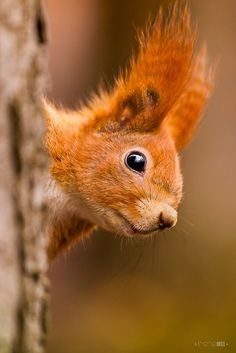Squirrel! – Photography by Irene Mei