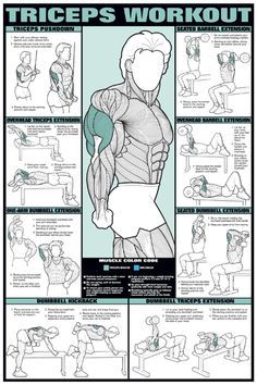 posters for workout training tricep | Item: Chart Series II Triceps Workout Poster