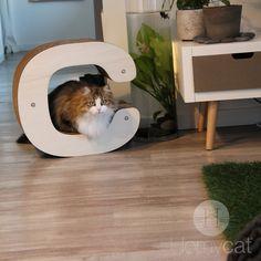 Découvrez Homycat, le tout nouveau concept de déco pour ton chat et toi ! Achetez dès maintenant sur Ulule --> https://fr.ulule.com/homycat/ le temps compté ! N'hésitez pas à soutenir le projet ;-)