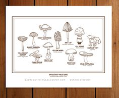 AdaLou {the Blog}: MINI COLLECTIONS : MYCOLOGIST FIELD GUIDE (MUSHROOMS)