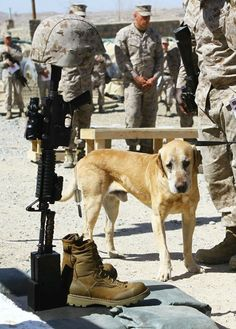 A dog sadly says his goodbyes to his good soldier friend.