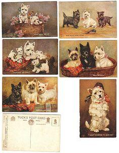 "Tuck's ""All Scotch"" Set of 6 Vintage Westie & Scottie Postcards"