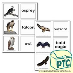 Birds of Prey Themed Matching Cards - Primary Treasure Chest Teaching Activities, Teaching Ideas, Crafts For Kids, Arts And Crafts, Sound Art, Matching Cards, Tot School, Jungle Animals, Birds Of Prey
