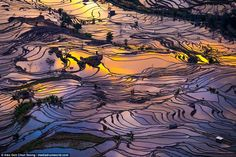 The water logged paddy fields reflect the colours of the dusky sky in fragmented layers th...