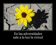 En las adversidades sale a la luz la virtud ;)