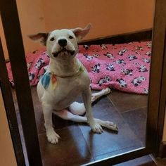 Paralyzed dog stuck in boarding, nobody wants to adopt her