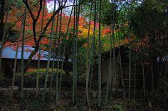 The Path Of Philosophy Kyoto Northern Higashiyama