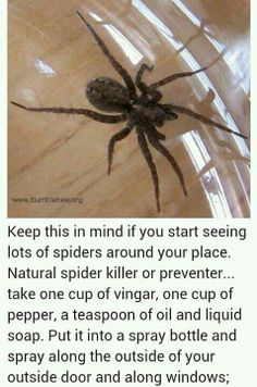 Prevent spiders in house: Natural spider killer or preventer... take one cup of vinegar, one cup of pepper, a teaspoon of oil and liquid soap. Put it into a spray bottle and spray along the outside of your outside door and along windows.