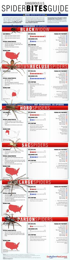 Spiders in general get a bad rap, but only a select few of them in the US are actually dangerous. This graphic gives you a clear picture of what the dangerous ones actually look like, tells you where they can be found, lists the common symptoms you might feel after being bitten, and gives you possible bite treatments.
