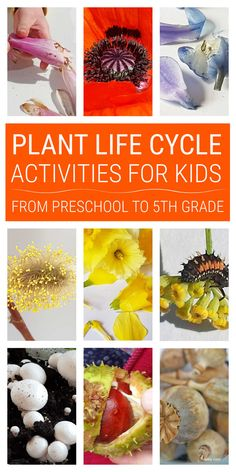 Plant life cycle activities for kids from preschool through kindergarten to 4th and 5th grade covering germination, pollination, seed formation, seed dispersal and more. #plantlifecycle #plantlifecycleactivities #lifecycleactivities #lifecycle #naturestudy Seed Dispersal, Nature Table, Nature Study, Photosynthesis, Nature Crafts, Life Cycles, Growing Plants, Activities For Kids, Kindergarten