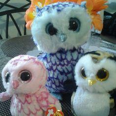 Oscar,Pink nd Owliver