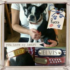 Too much cuteness!  Rocco is rockin' that studded collar like a boss!!!  http://www.kippyandco.com/products/personalized-leather-studded-collar