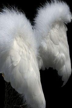 "Feather Wings 21"" x 15"" White Marabou Trim"