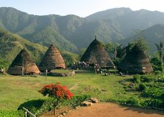 reconstruction of the last remaining traditional thatched residences on Flores Island, Indonesia.