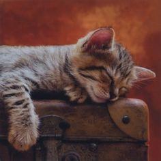 Салфетка для декупажа - кот на чемодане Цена за 1 салфетку.Производство Германия.