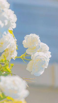 Flower Phone Wallpaper, Soft Wallpaper, Scenery Wallpaper, Aesthetic Iphone Wallpaper, Aesthetic Wallpapers, Aesthetic Photography Nature, Nature Aesthetic, Flower Aesthetic, Beautiful Flowers Wallpapers