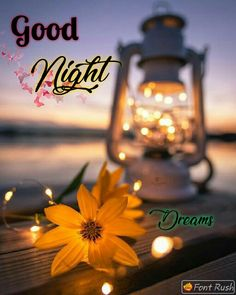 Cute Good Night Quotes, Good Night Images Hd, Good Night Messages, Night Pictures, Morning Images, Good Night Friends, Good Night Wishes, Good Night Sweet Dreams, Good Morning Good Night