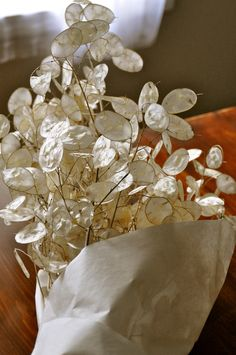Silver Dollar plant (Lunaria Annua) My Grandmother, Aunt & I have all grown this. I love this plant.