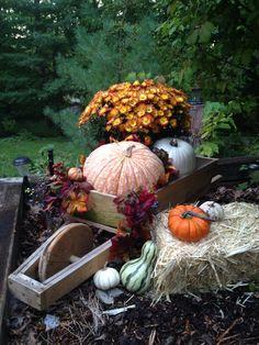 My fall entry Autumn Displays, Happy Fall, I Fall, Pumpkin, Holidays, Halloween, Shop, Outdoor, Outdoors