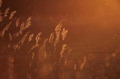 Photo sunset by Enikő Pécz on 500px