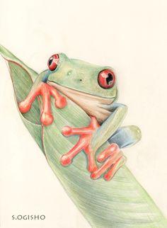 アカメアマガエル Frog Art, Creatures, Sketches, Graphics, Animals, Animales, Graphic Design, Animaux, Draw
