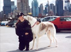 Kobold ...  9-11 Therapy Dog by Ferlinka Borzoi (Deb West), via Flickr