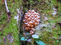 Ölümsüzlüğün Kaynağı endemik bitki türü Kazdağları'ndan Çıktı