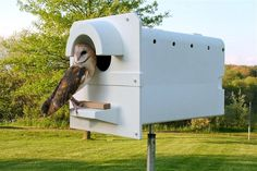 Owls to the rescue: Nesting boxes attract the predatory birds that control rodents | Pittsburgh Post-Gazette