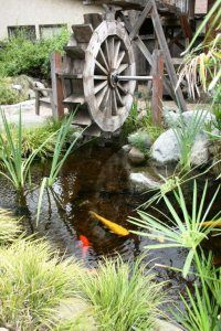 The Value of Clean Ponds to the Environment