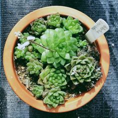 Indoor Succulents That Thrive - Sunset