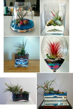 Brilliant Air Plant Design Gift Shop Colored Sand Add An Exciting Element To Terrarium And Succulent Care Uk Canada Holder Australium Bunning Display Purple Succulents, Hanging Succulents, Succulent Pots, Succulents Garden, Succulent Care, Air Plant Terrarium, Garden Terrarium, Succulent Centerpieces, Colored Sand