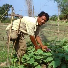 Social farming (also called care farming): an innovative approach for promoting women's economic empowerment, decent rural employment and social inclusion. What works in developing countries? | Global Forum on Food Security and Nutrition (FSN Forum) - FAO