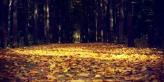 Dive into the darkness and experience the impermanence of all things at the autumn equinox Terre Nature, Autumn Nature, Mabon, Nature Wallpaper, Paths, Leaves, Sunset, Outdoor Decor, Painting