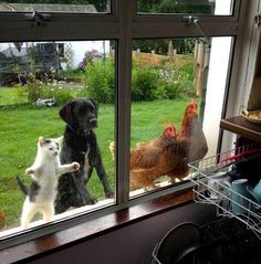 Funny curious animals looking in the window